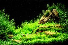 Green Beautiful Planted Tropic...