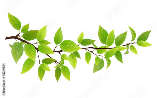 Leinwand Poster Small tree branch with green leaves