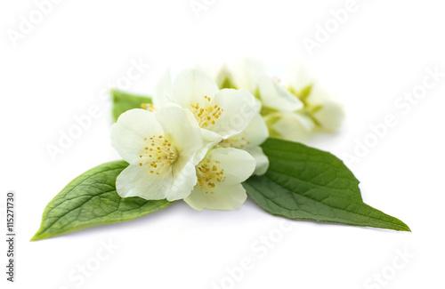 Fotografie, Obraz  Fresh jasmine flowers on white background