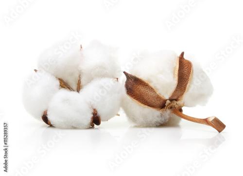 Fotobehang Planten Cotton plant flower isolated