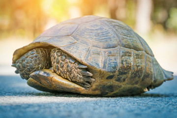 turtle hiding in shell on the road