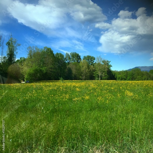 Fotografia, Obraz  campo di fiori in campagna