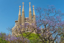 Famous Catholic Cathedral And Blooming Trees On Sunny Day