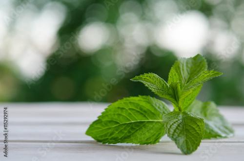 Fotografie, Obraz  Fresh green mint on white wooden table