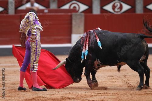 Torero y toro bravo