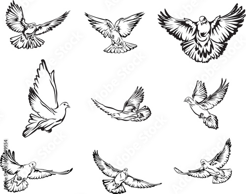 Fotomural Dove, flying dove black and white image, options image, vector, drawing, illustr