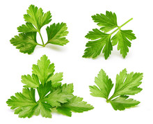 Parsley Herb Isolated