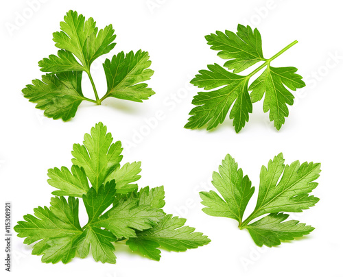 Cuadros en Lienzo Parsley herb isolated