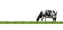 Schwarz/Weiß Gescheckte Kuh