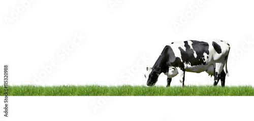 Photo Stands Cow Schwarz/Weiß gescheckte Kuh