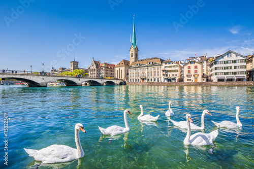 La pose en embrasure Cygne Zürich city center with swans on Limmat river, Switzerland