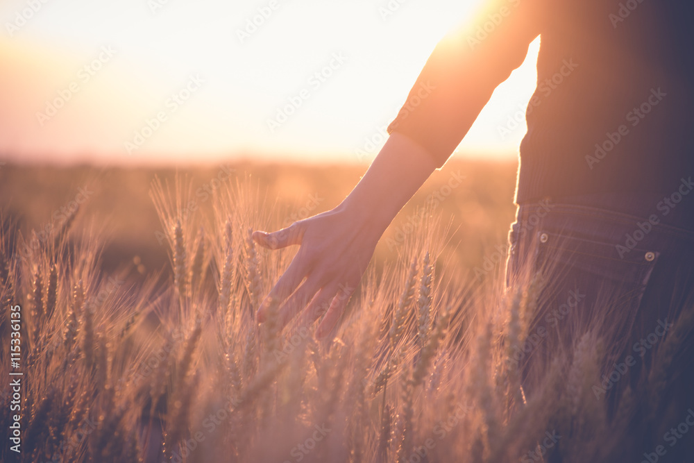 Fototapety, obrazy: Woman in a wheat field in the sun