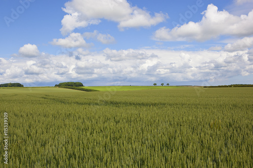 Poster Lime groen yorkshire wolds wheat fields