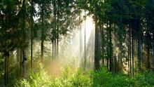 Wald Bei Sonnenaufgang