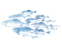 Fish Flock Isolated On White B...