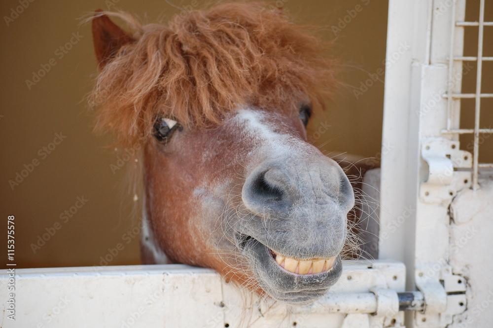 Fotografie, Obraz Happy Pony