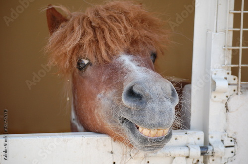 Photo Happy Pony