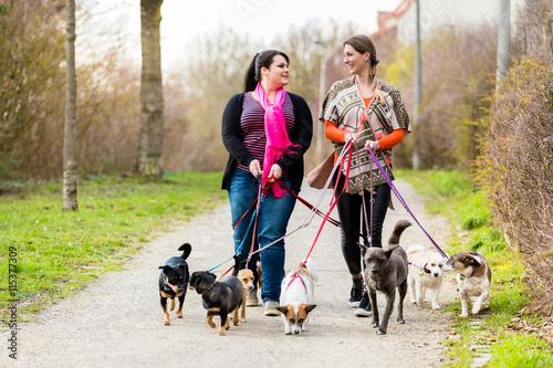 Fotomural Dog sitters walking their customers