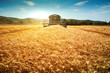 canvas print picture - Harvester machine to harvest wheat field working