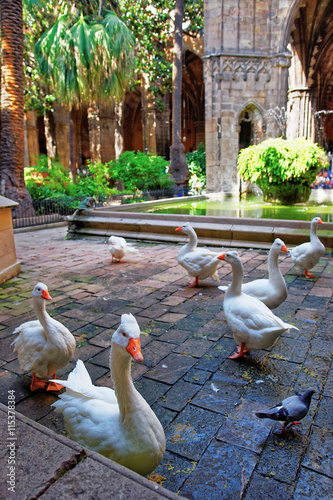 Geese in Cloister of Barcelona Cathedral in the Gothic Quarter