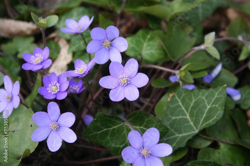 Piccoli Fiori Viola.Piccoli Fiori Viola Selvatici Buy This Stock Photo And Explore
