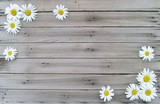 White Daisies on Weathered Wood Background with Copy Space in Middle