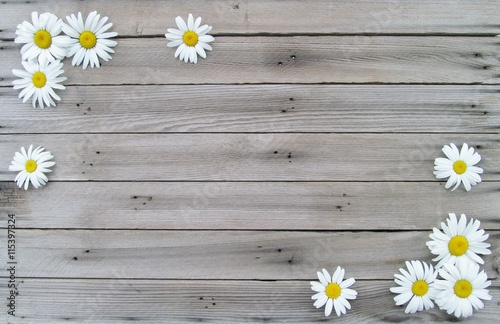 Staande foto Madeliefjes White Daisies on Weathered Wood Background with Copy Space in Middle