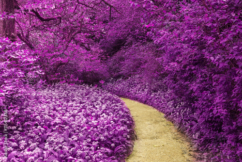 Poster Violet Stunning infrared landscape image of forest with alternative col