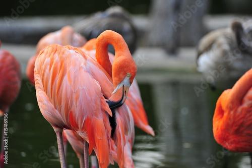 Garden Poster Flamingo flamingos