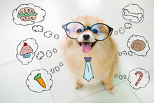 Pomeranian Spitz Dog Smiles Thinking About Feeding The Hungry..