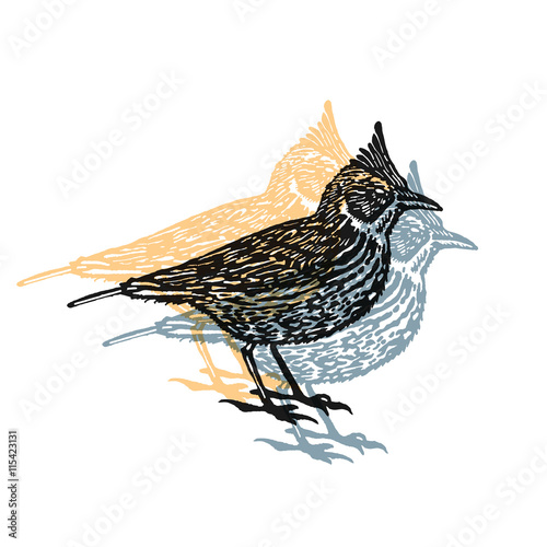 Valokuvatapetti Vector Illustrated lark bird in engraved technic on white background