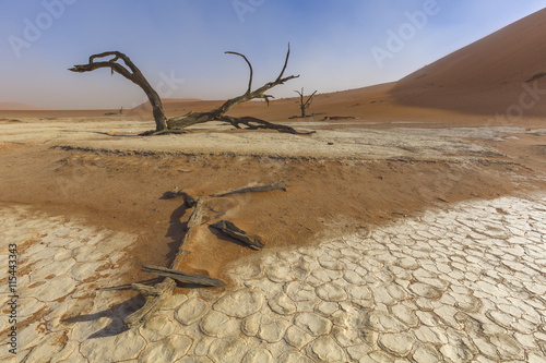 obraz lub plakat Dead tree in Deadvlei