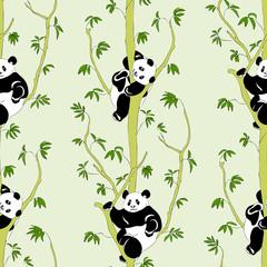 FototapetaCute panda on eucalyptus