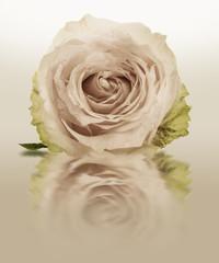 Fototapeta Grunge Rose Vintage Flowers