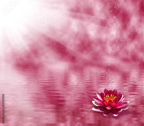 In de dag Candy roze image of a lotus flower on the water