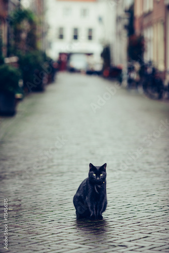 Foto auf AluDibond Katze Black cat in a beatifull dutch street