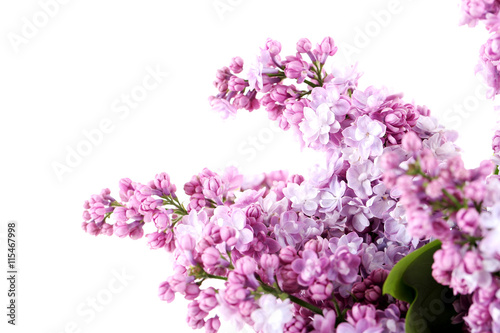 Foto op Canvas Lilac Blooming lilac flowers isolated on a white