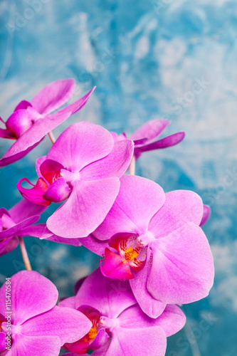 Orchids bloom on blue background. Pink color. Spa card.