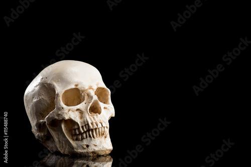 Fotografía  骸骨, 黒 背景