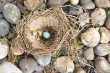 Old Nest With One Egg