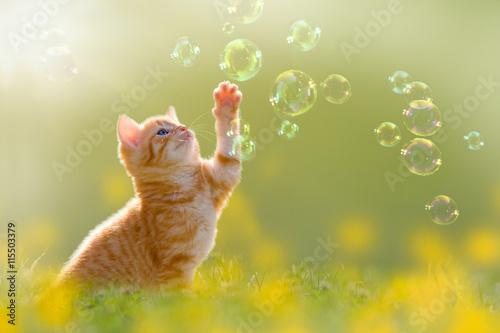 Foto op Plexiglas Kat junges Kätzchen spielt mit Seifenblasen, bubbles