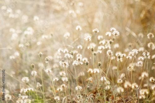 Cadres-photo bureau Pissenlits et eau blurred grass flowers background