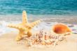 sandy beach. Starfish on the Beach. Summer Time
