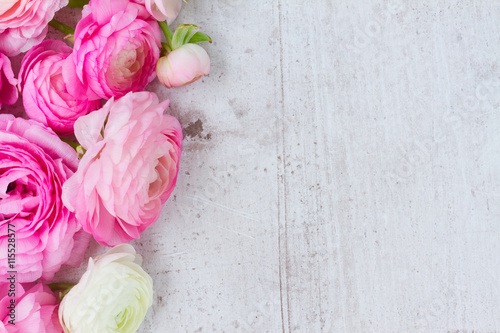 Garden Poster Floral Pink and white ranunculus flowers on aged white wooden background