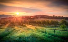 Sunrise Over Olive Field