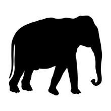 Adult Male Elephant Black Silhouette