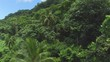 AERIAL: Dense acacia and palm trees forest in mountain jungle