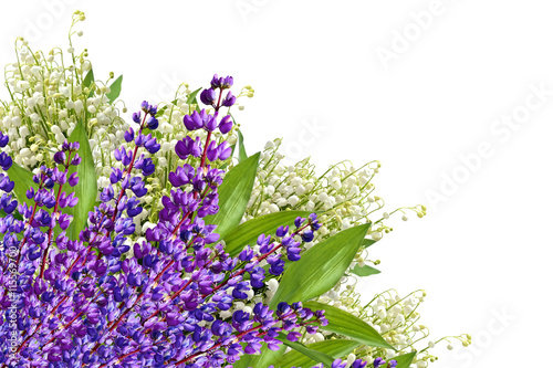 Foto op Canvas Lavendel Blue lupines beautiful flowers on a white background
