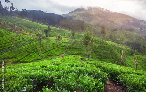 Deurstickers Groene Tea plantation
