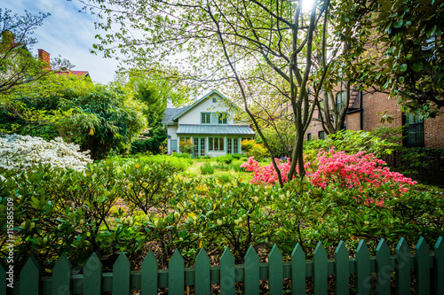 Beautiful garden and house in Bolton Hill, Baltimore, Maryland. Wallpaper Mural
